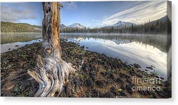 The Old Tree Trunk Canvas Print