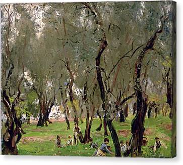 The Olive Grove Canvas Print by John Singer Sargeant