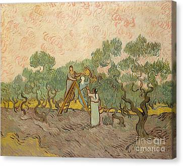 The Olive Pickers, Saint-remy, 1889 Canvas Print