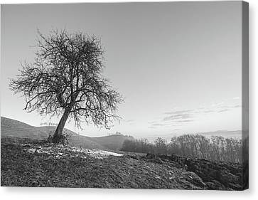 Canvas Print featuring the photograph The One by Davorin Mance