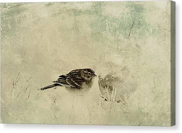 The Orange And Sparrow Canvas Print