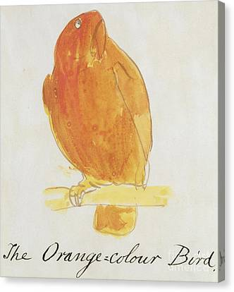 The Orange Color Bird Canvas Print by Edward Lear