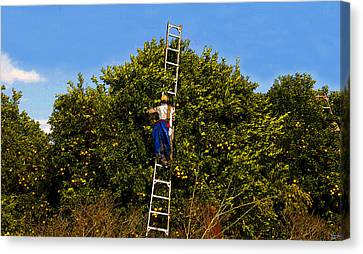 The Orange Picker Canvas Print by David Lee Thompson