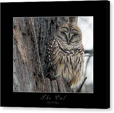 Oak Canvas Print - The Owl by Betsy Knapp