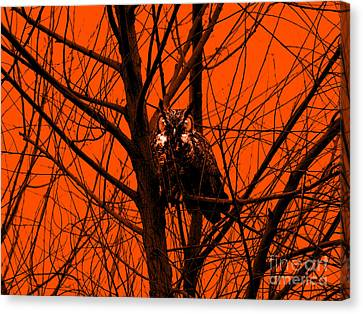The Owl . Orange Canvas Print by Wingsdomain Art and Photography