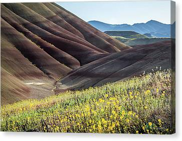 Canvas Print featuring the photograph The Painted Hills In Bloom by Tim Newton