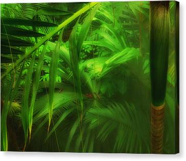 Canvas Print featuring the photograph The Palm Forest  by Connie Handscomb