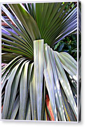 The Palm Canvas Print by Mindy Newman