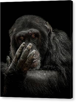 Primate Canvas Print - The Palm Reader by Paul Neville