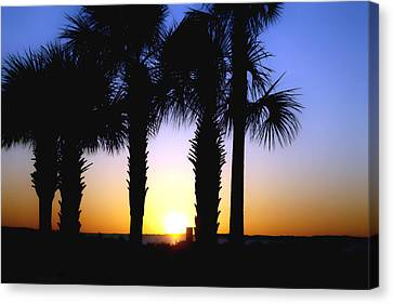 The Palms At Sunset Canvas Print by Debra Forand