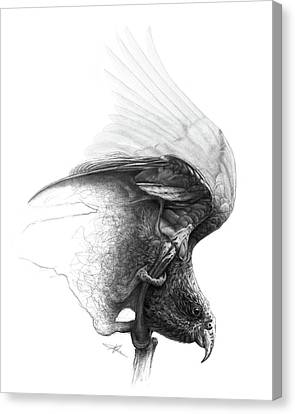 Raptor Canvas Print - The Parrot by Christian Klute
