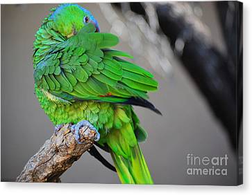 The Parrot Canvas Print by Donna Greene