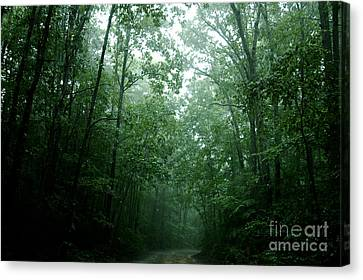 Bruster Canvas Print - The Path Ahead by Clayton Bruster