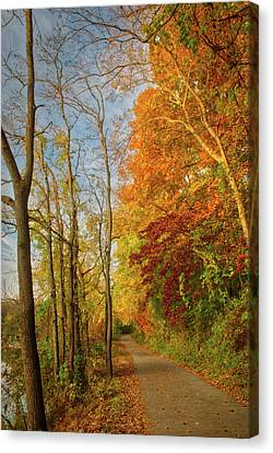 Canvas Print featuring the photograph The Path In Fall by Mark Dodd