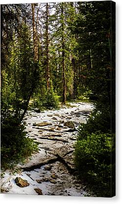 The Path In The Forest Canvas Print by TL Mair