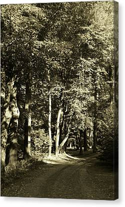 Canvas Print featuring the photograph The Path Less Traveled by John Schneider