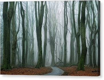 Winter Roads Canvas Print - The Path by Martin Podt
