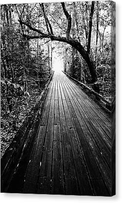Louisiana Sunrise Canvas Print - The Path - Bw by Scott Pellegrin