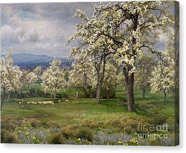 The Pear Orchard Canvas Print by Alfred Parsons