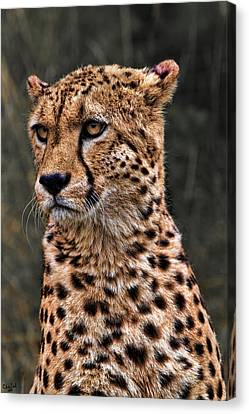 The Pensive Cheetah Canvas Print by Chris Lord