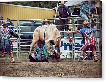 The Perils Of Bull-riding Canvas Print