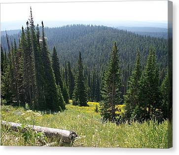 The Pine Trees Canvas Print