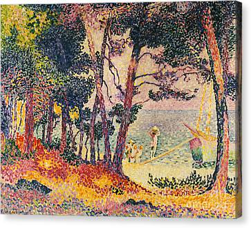 The Pine Wood, Provence Canvas Print