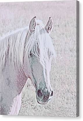 Canvas Print featuring the photograph The Pink Horse by Jennie Marie Schell