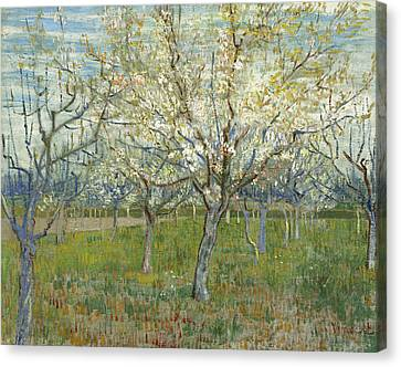 The Pink Orchard  Canvas Print by Vincent van Gogh