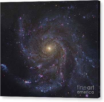 The Pinwheel Galaxy Canvas Print by Robert Gendler