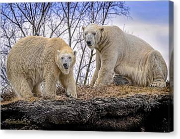 The Polar Bears Canvas Print