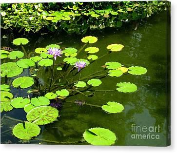 Canvas Print featuring the photograph The Pond by Robert D McBain