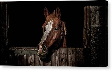 The Poser Canvas Print by Paul Neville