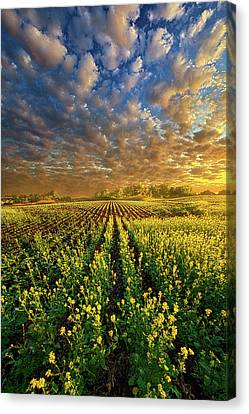 The Possibilities Are Many Canvas Print by Phil Koch