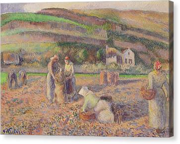The Potato Harvest Canvas Print