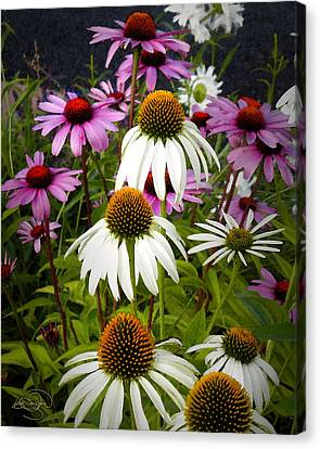 The Promise Of Spring Canvas Print