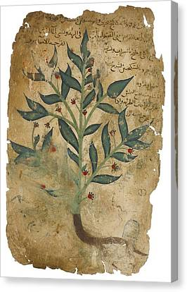 The Properties Of Plants Canvas Print by Dioscorides