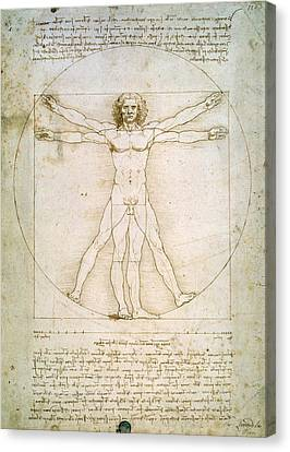 Human Canvas Print - The Proportions Of The Human Figure  by Leonardo Da Vinci