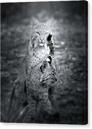 Baby Bobcat Canvas Print - The Protector by Mark Andrew Thomas