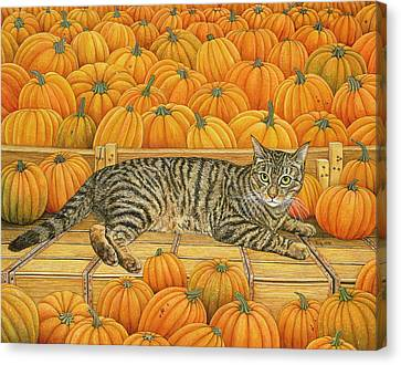 The Pumpkin Cat Canvas Print