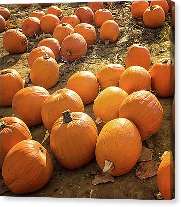 The Pumpkin Patch Canvas Print by Martin Newman