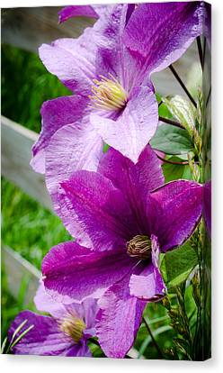 The Purple Flowers Canvas Print by Amy Turner
