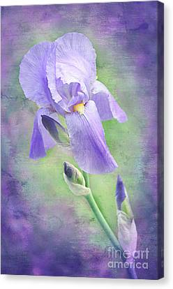 Close Focus Floral Canvas Print - The Purple Iris by Andee Design