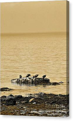 Canvas Print featuring the photograph The Quatuor - Gold by Aimelle