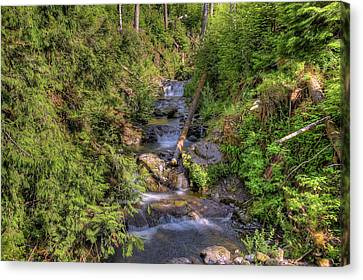 The Quinault Stream 2 Canvas Print