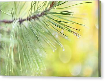 Canvas Print featuring the photograph The Rain The Park And Other Things by John Poon