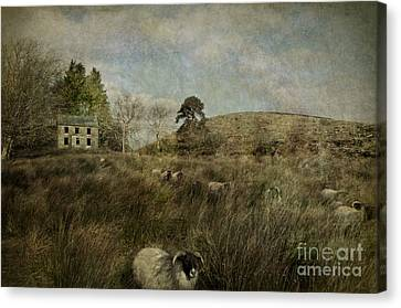 The Ram Canvas Print by Marion Galt