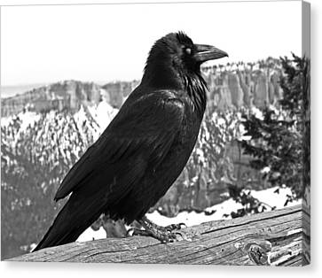The Raven - Black And White Canvas Print