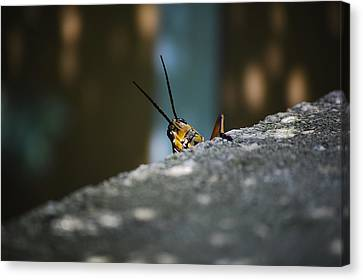 The Real Hopper Canvas Print by Robert Meanor