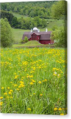 Canvas Print featuring the photograph The Red Barn And Dandelions by Paula Porterfield-Izzo